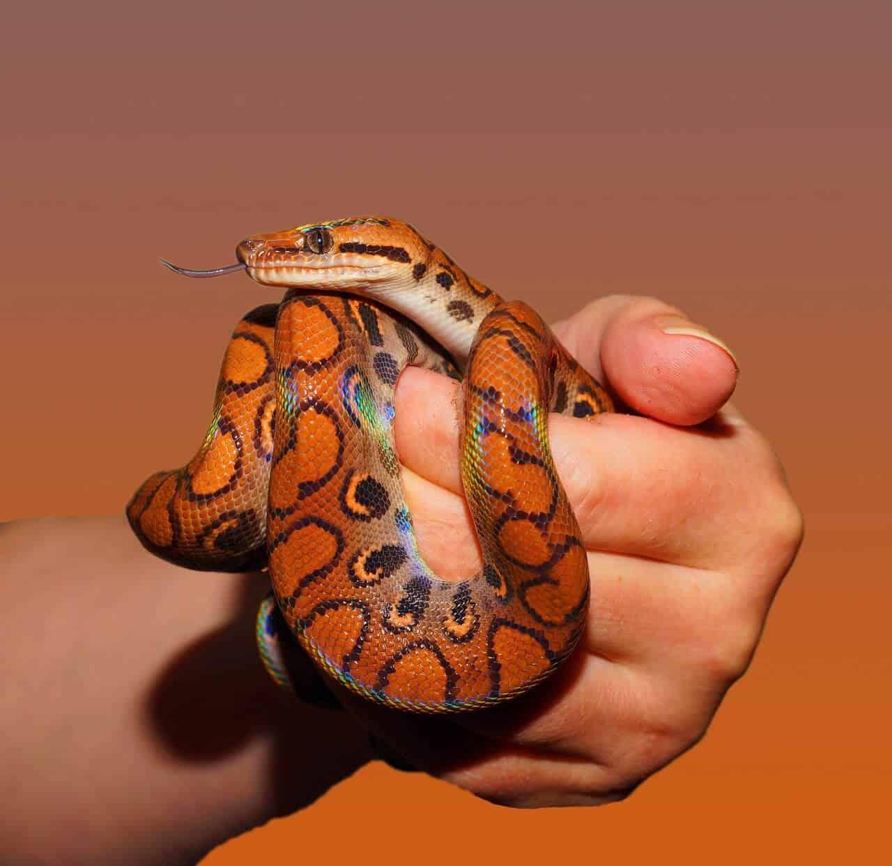 Accessori per serpenti, terrari, corteccia, guida all'acquisto