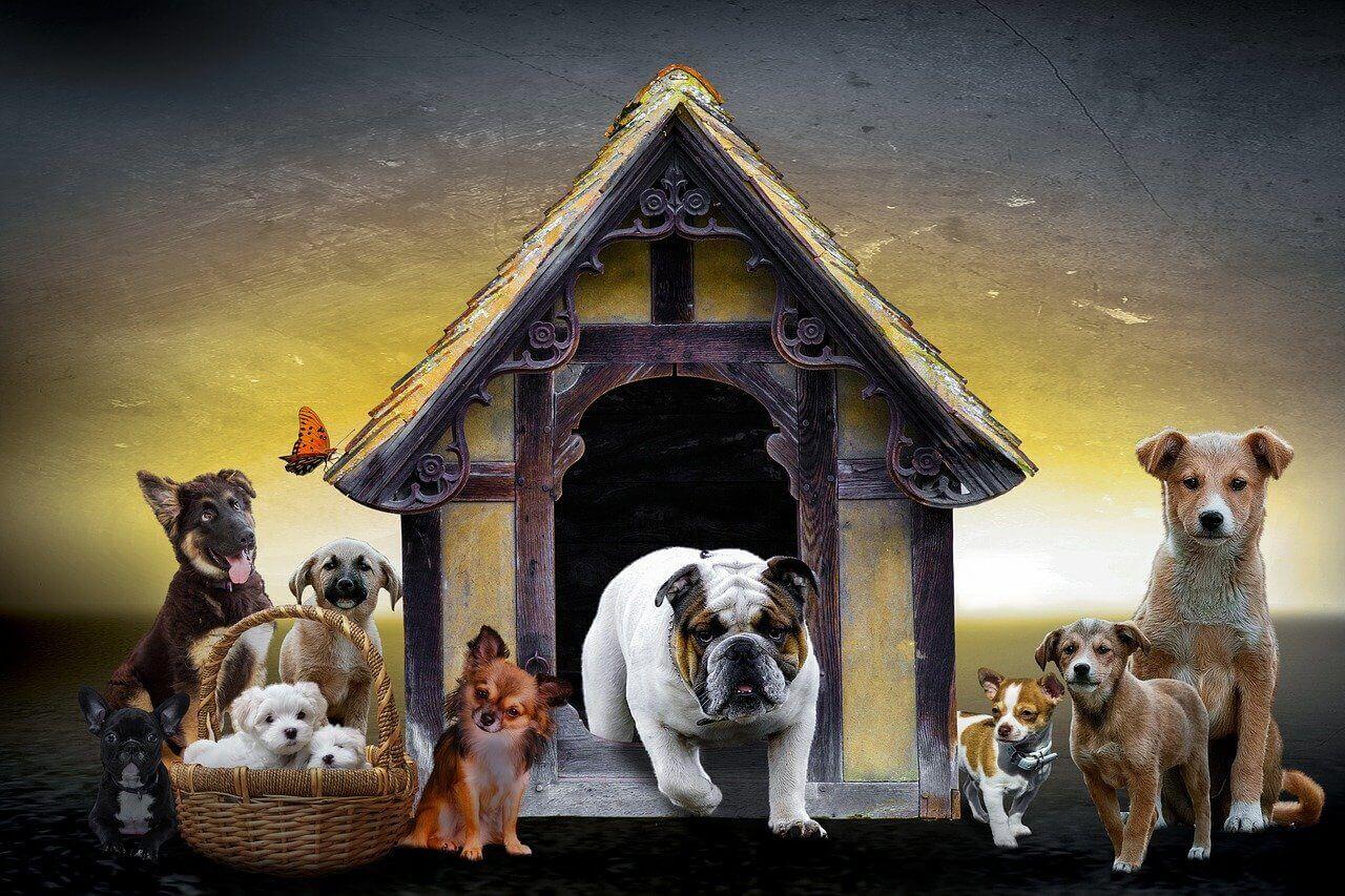 Le migliori cucce per cani, recensione e guida all'acquisto online