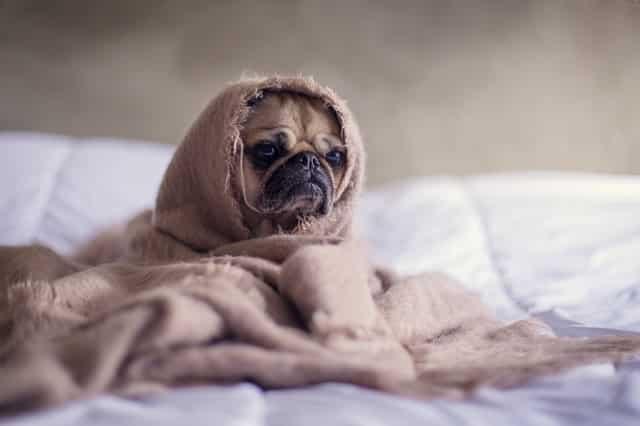 Tappeto riscaldato per cani, i migliori sul mercato online