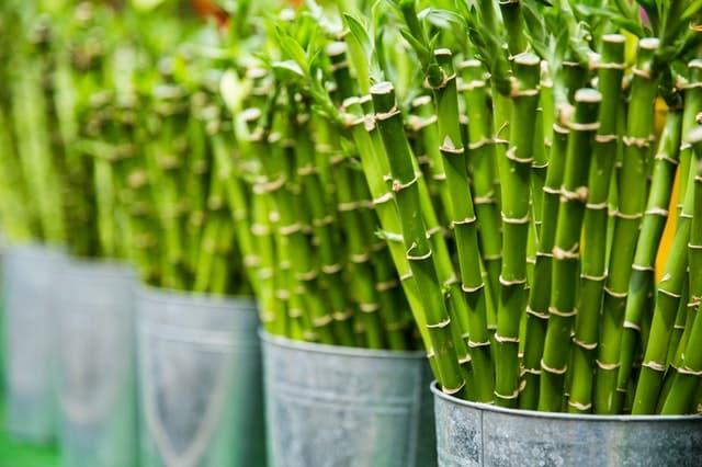 Prodotti in Bamboo per la casa e l'igiene personale